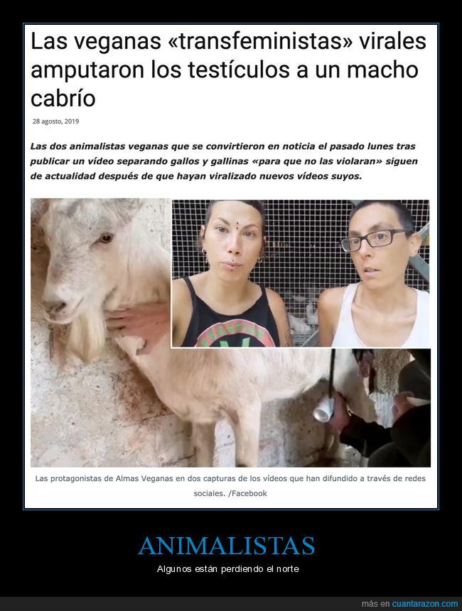cabra,castración,veganas