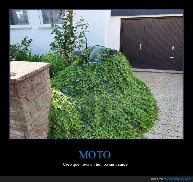 moto,plantas,wtf
