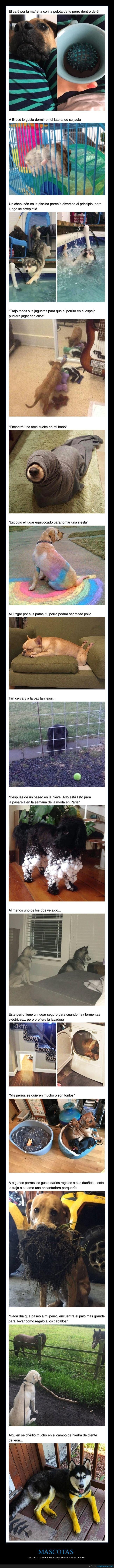 mascotas,perros,wtf