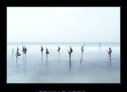 Enlace a Los pescadores zancudos de Sri Lanka