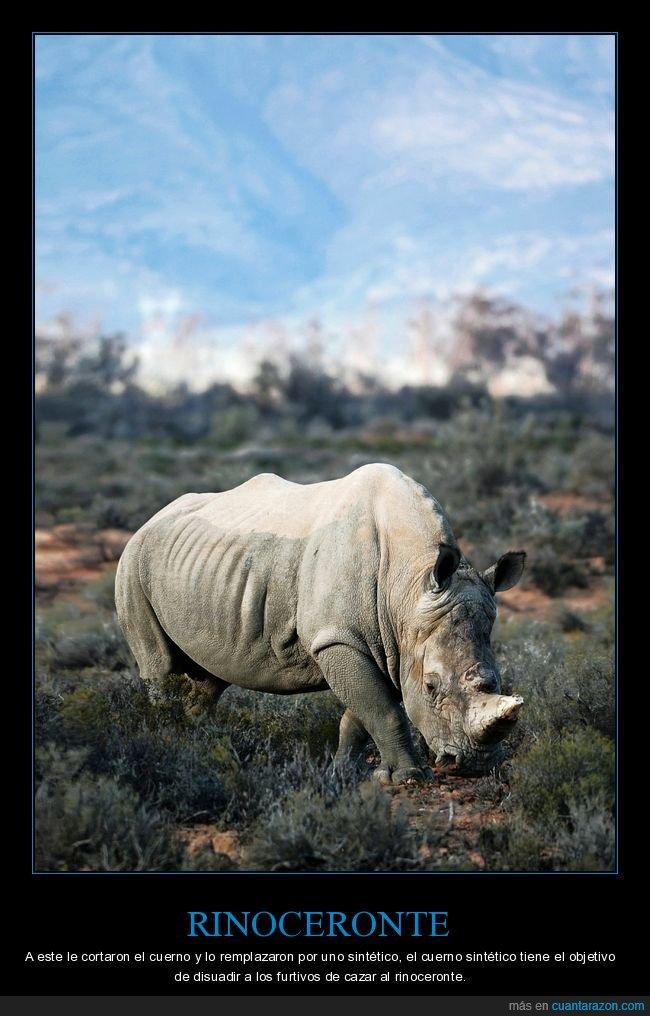 cuerno,rinoceronte,sintético