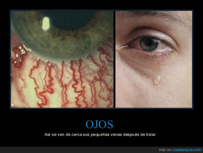 curiosidades,llorar,ojos,venas