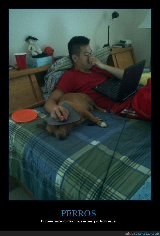 alfombrilla,ordenador,perros,ratón