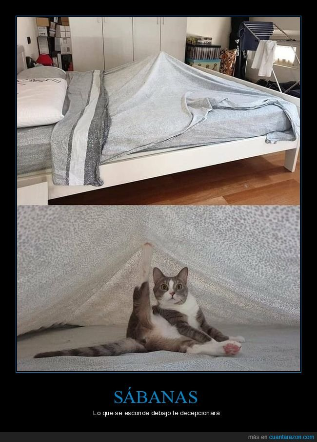 cama,gato,postura,sábana