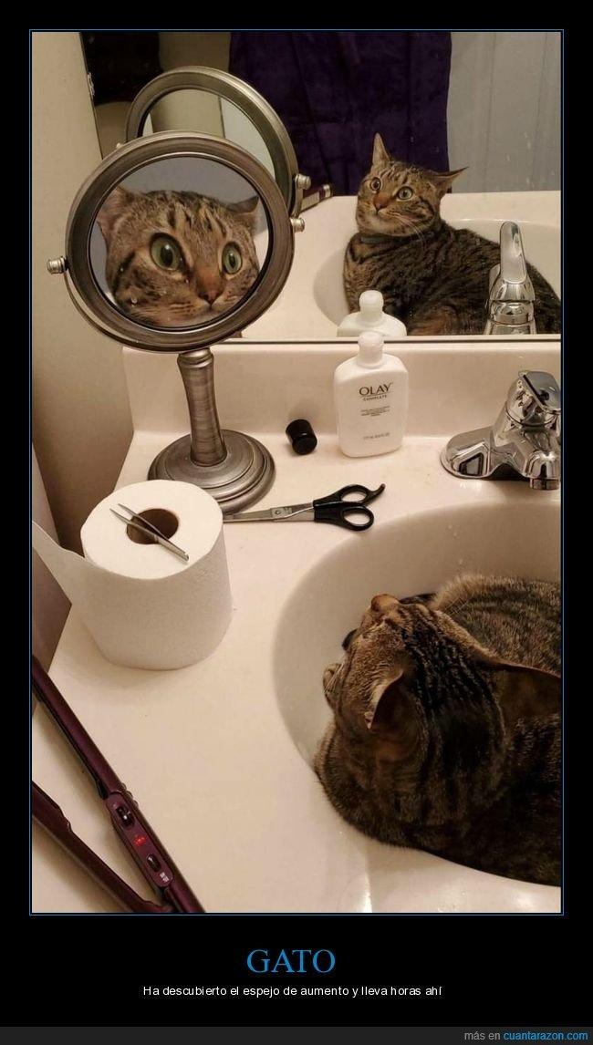 espejos,gatos,wtf