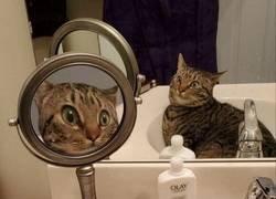Enlace a Gato flipando con los espejos