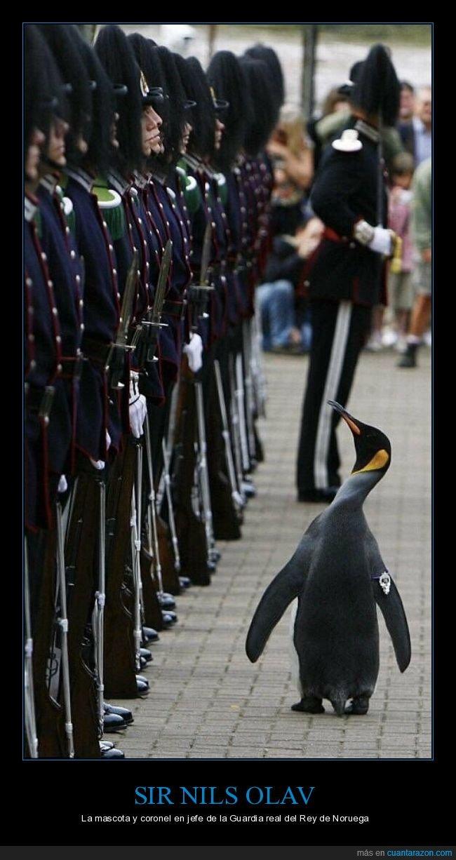 guardia real,mascota,noruega,pingüino,sir nils olav