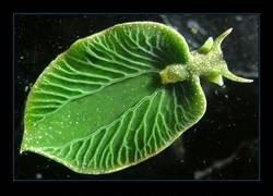 Enlace a Entre planta y animal