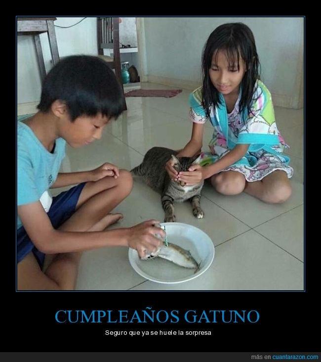 cumpleaños,gatos,pescado,vela
