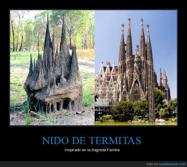 nido,parecidos,sagrada familia,termitas