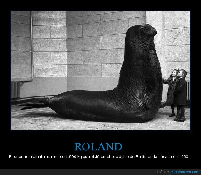 elefante marino,gigante,roland,zoo