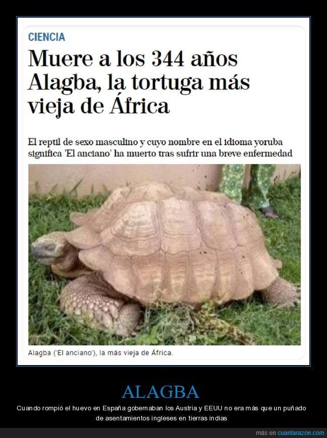 muerte,tortuga,vieja