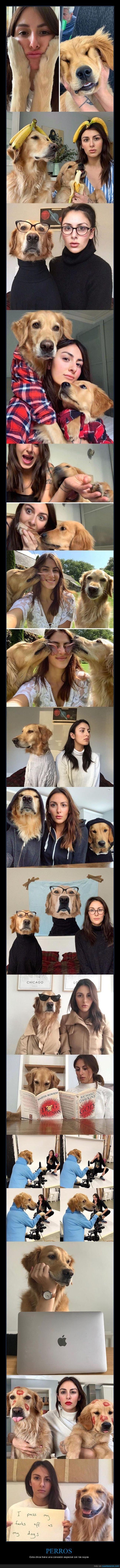 conexión,perros