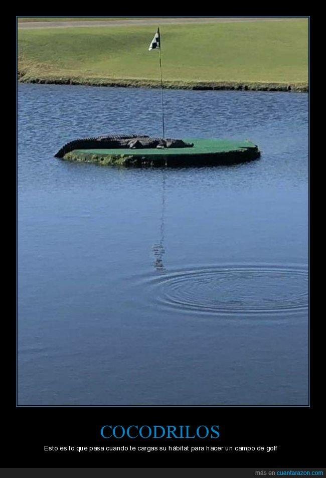 campo de golf,cocodrilo