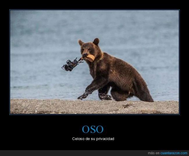 cámara,fotos,oso
