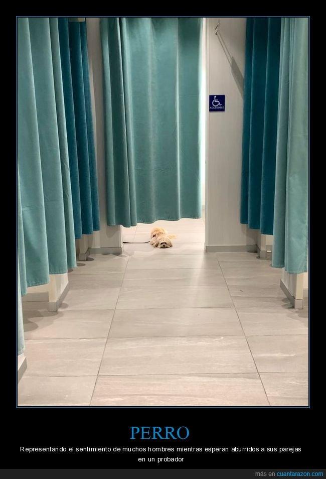 esperando,perros,probador