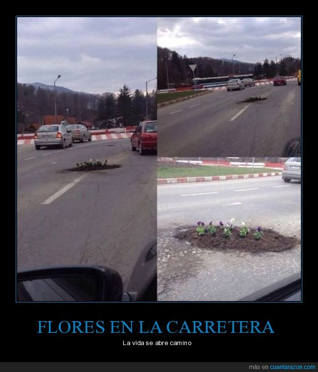 carretera,flores,wtf