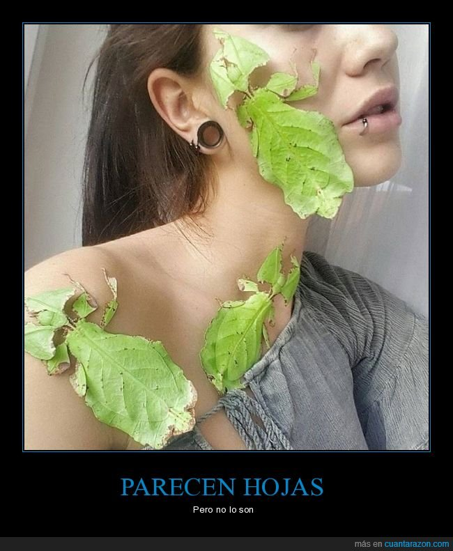 bichos,hojas,insecto hoja