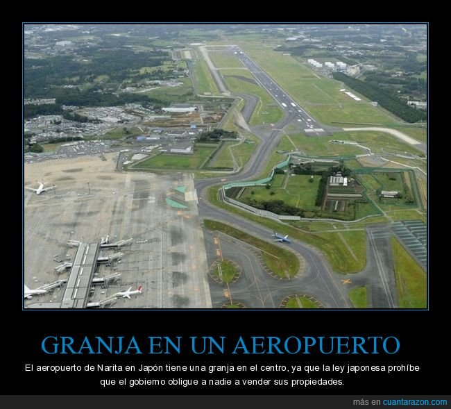 aeropuerto,granja,japón,narita,vender