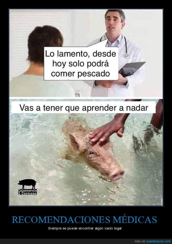 cerdo,comer,médico,nadar,pescado