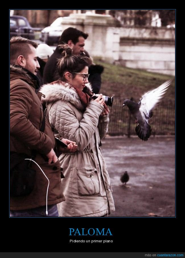 cámara,fotos,paloma