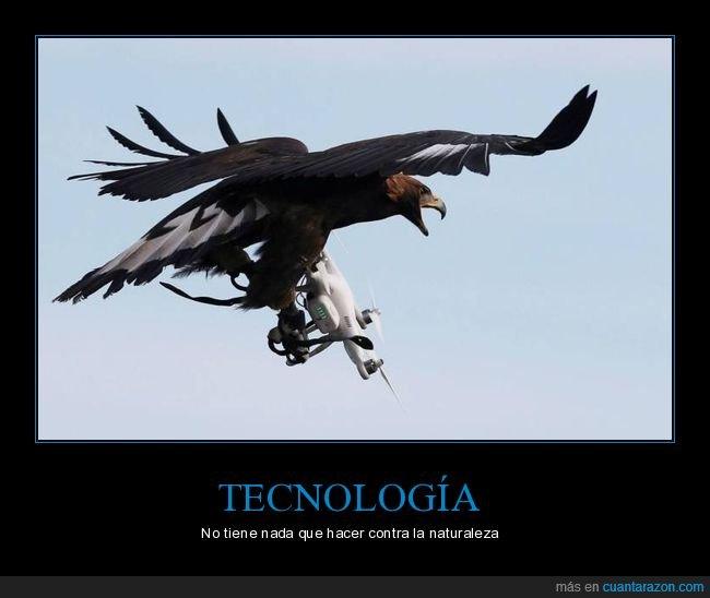 águila,dron,wtf