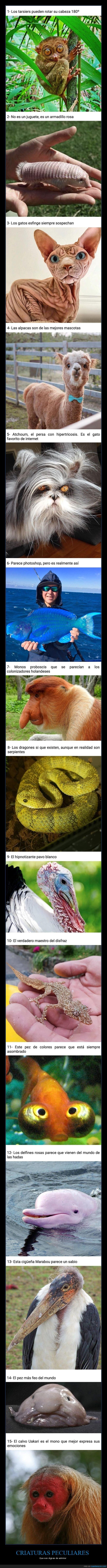 animales,curiosidades,peculiares