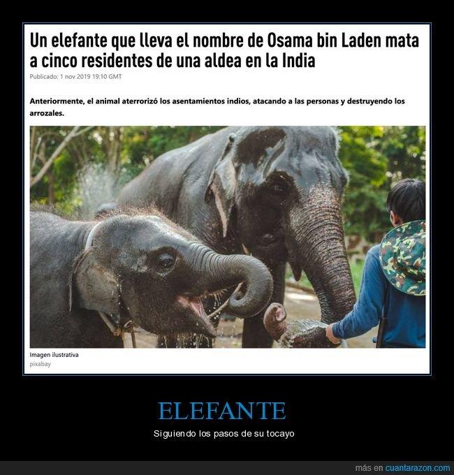 elefante,matar,nombre,osama bin laden,wtf