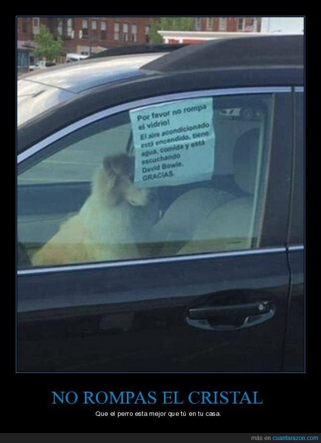 cartel,coche,perros