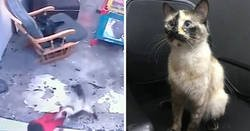 Enlace a Un gato salió corriendo para salvar a un bebé que estaba a punto de caerse por las escaleras