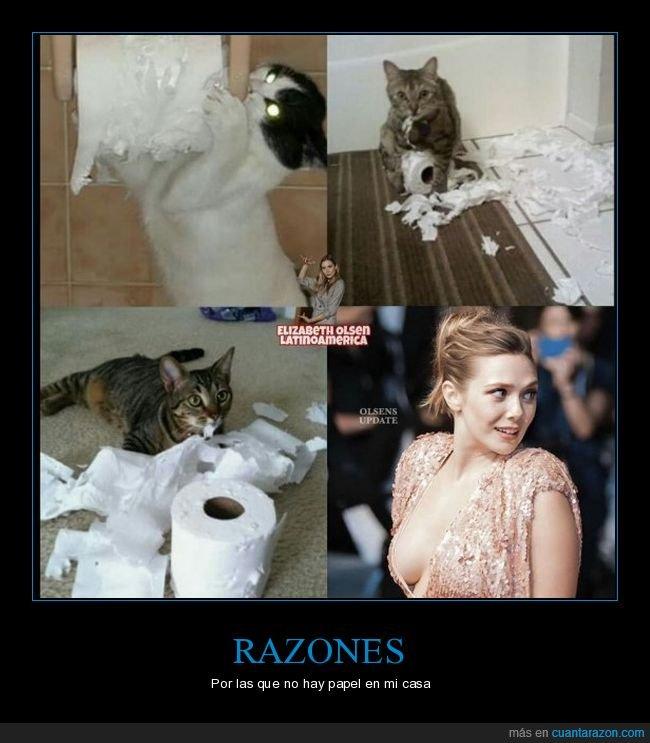 casa,elisabeth olsen,gato,papel