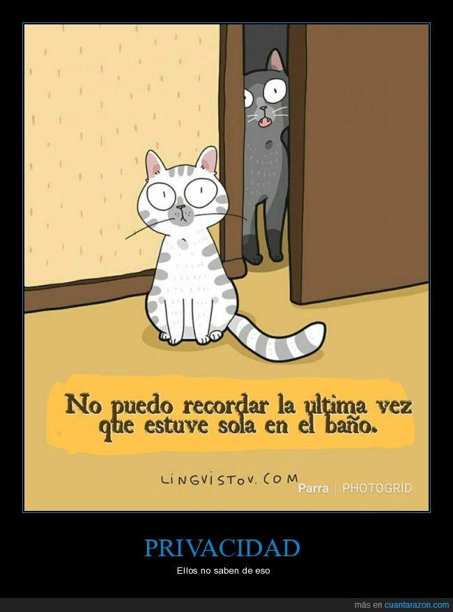 aseo,gatos,privacidad,sola