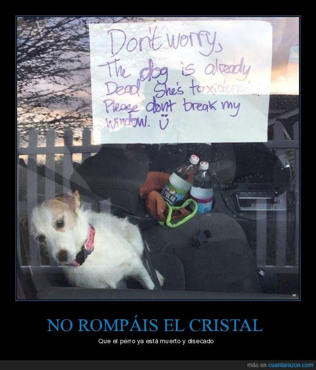 cartel,coche,cristal,disecado,perro,romper