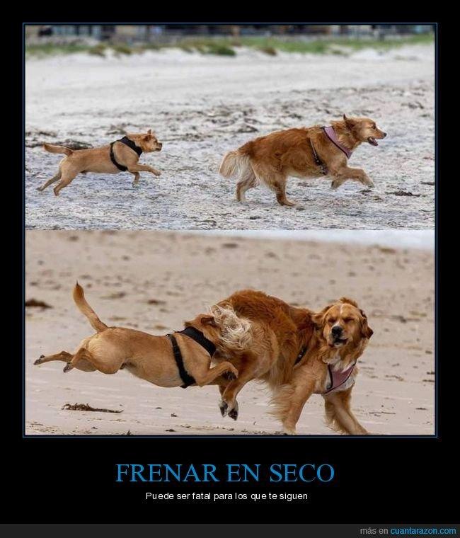 corriendo,fails,frenada,perros