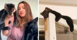 Enlace a Esta mujer rescató a una marta cibelina de convertirse en abrigo de piel, y se la quedó como mascota al no poder vivir en estado salvaje
