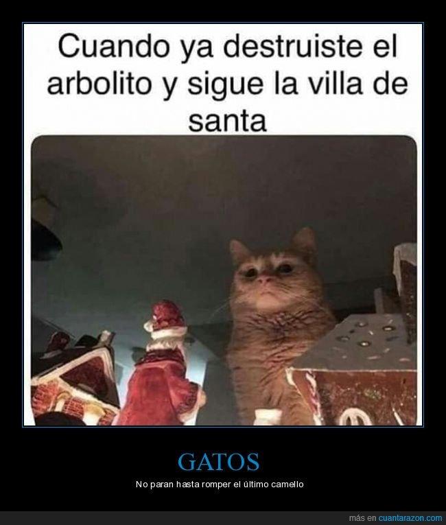 árbol de navidad,decoración,destruir,gatos
