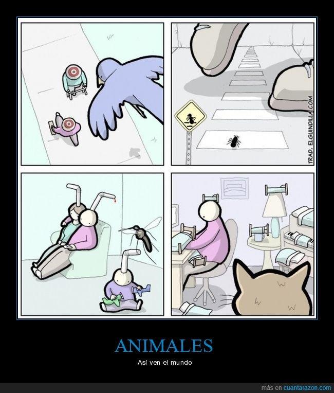 animales,mundo,ver