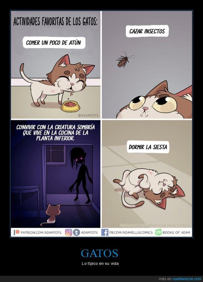 actividades,criatura sombría,gatos