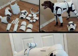 Enlace a Perro de asalto