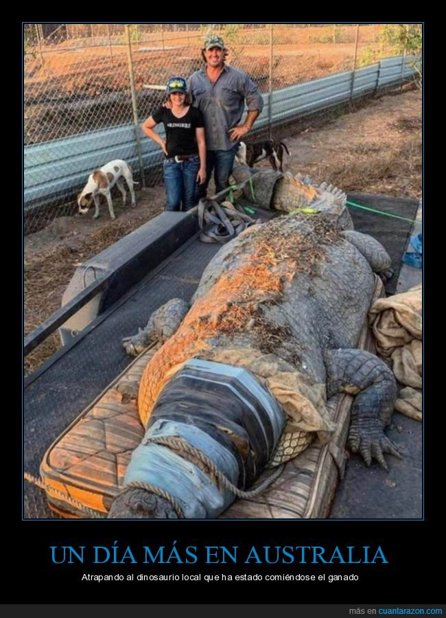 australia,cocodrilo,gigante