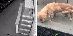 """Enlace a Este hombre dejó sin querer abierta la puerta de su casa y fue """"elegido"""" por un perro callejero que se coló por la noche"""