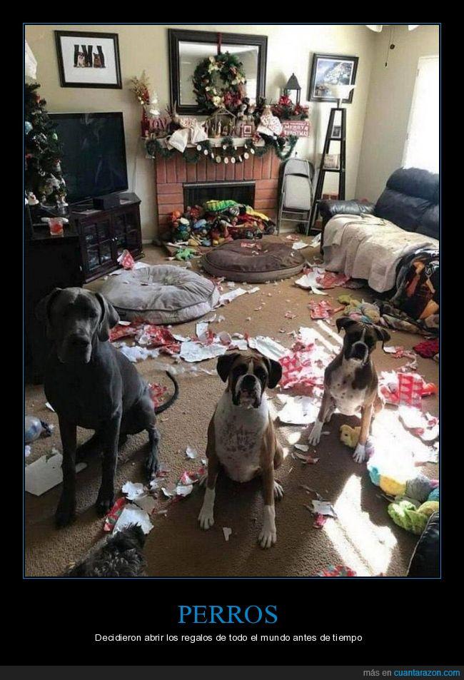fails,perros,regalos