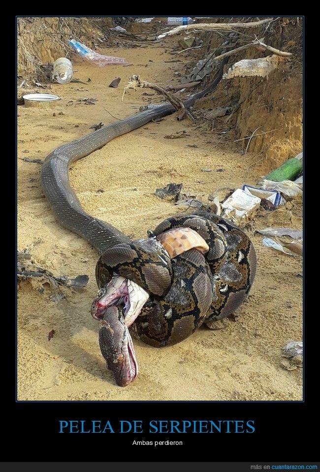 muertas,pelea,perder,serpientes