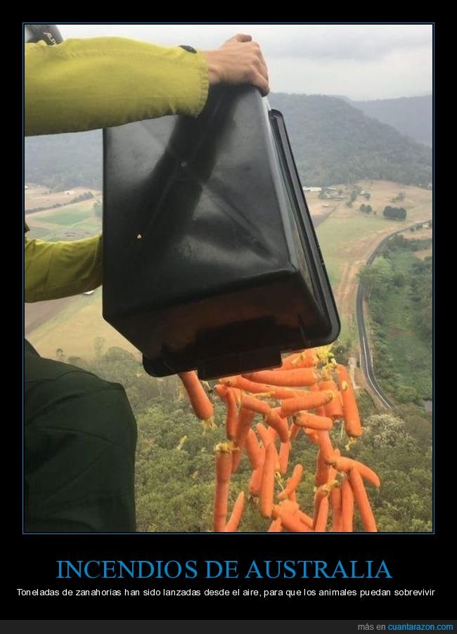 animales,australia,incendios,zanahorias