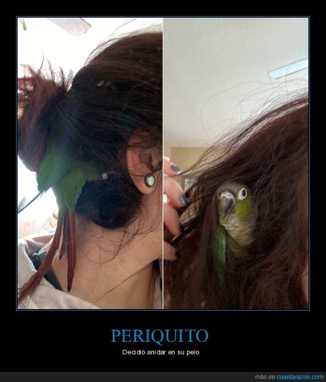 pájaro,pelo,periquito