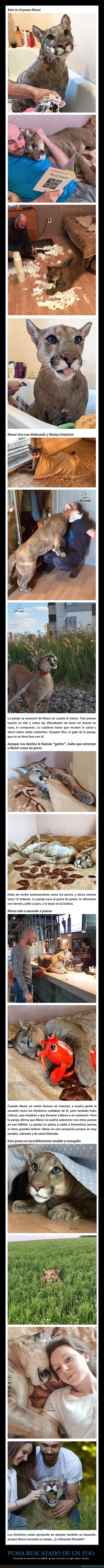 puma,rescatado,zoo