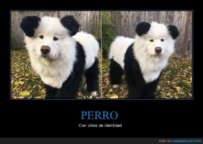 oso panda,perro,wtf