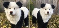 Enlace a El mítico perro panda