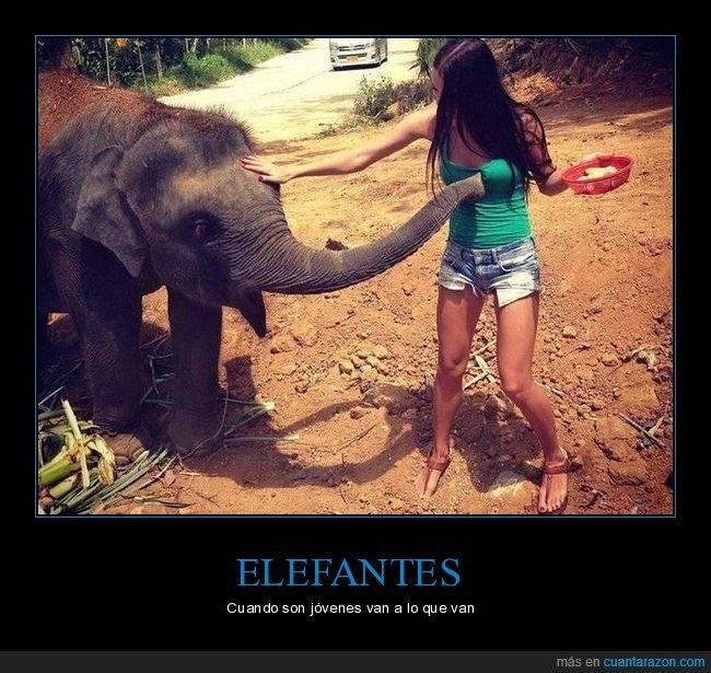 chica,elefante,trompa