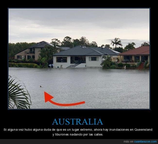 australia,inundación,queensland,tiburones